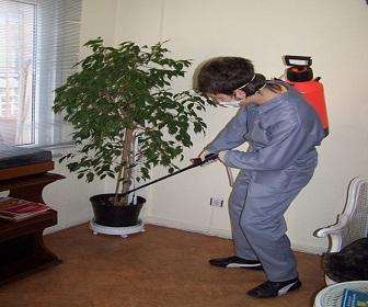 Pest Line Pest Control Specialist